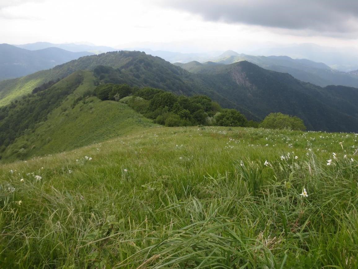 Monte Buio, narcisi